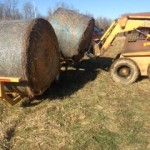 2015 unloading bales